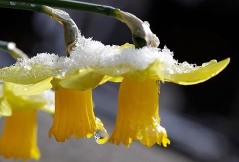 The Refrain of Springtime